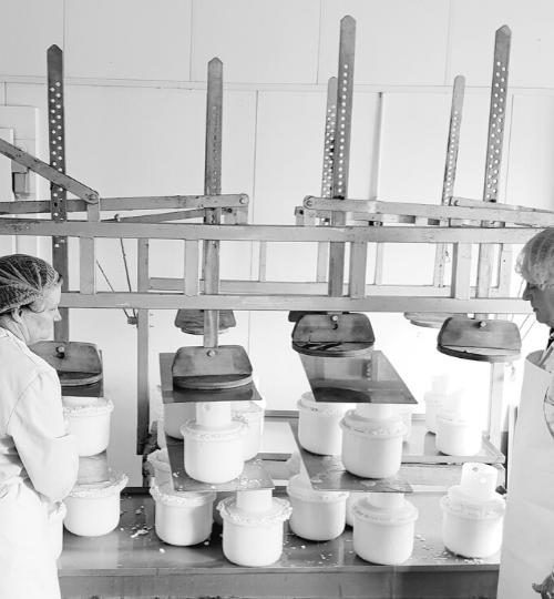 Making Cratloe Cheese
